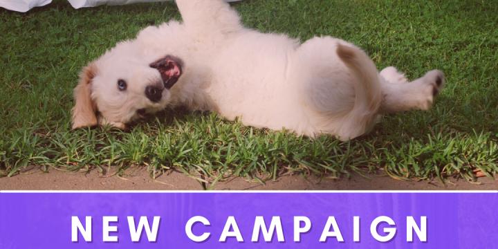 New Campaign:  Goodpup
